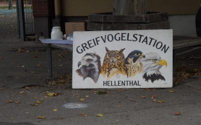 Ungewöhnlicher Besuch – Flugshow aus Hellenthal